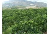 AZIENDA AGRICOLA BAIAMONTE FRANCESCO